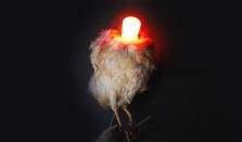 Table lamp - L'oiseau